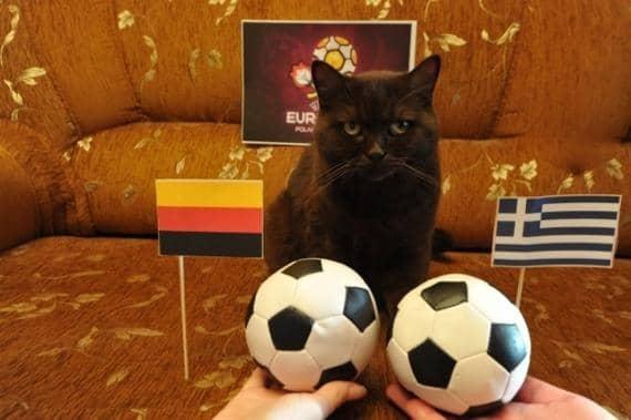 Футбол и кот