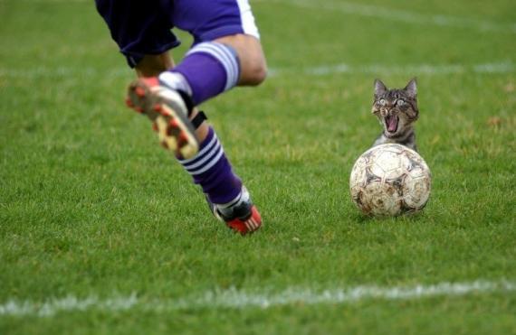 Кот с мячом