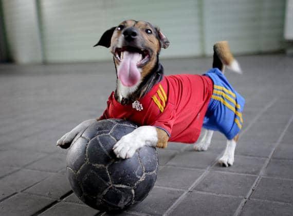 Собака с мячиком